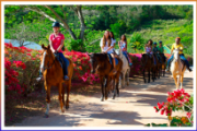 caribbean-world-horseback-riding-2
