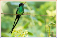 caribbean-world-hummingbird-jamaica